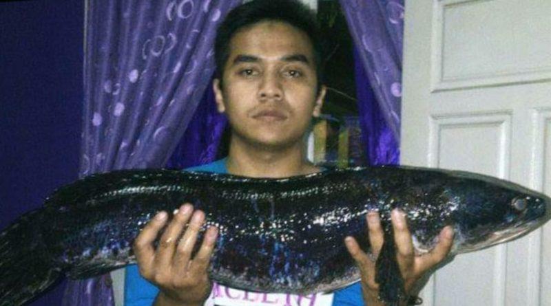 Donny Boy Hobi Pelihara Ikan Predator